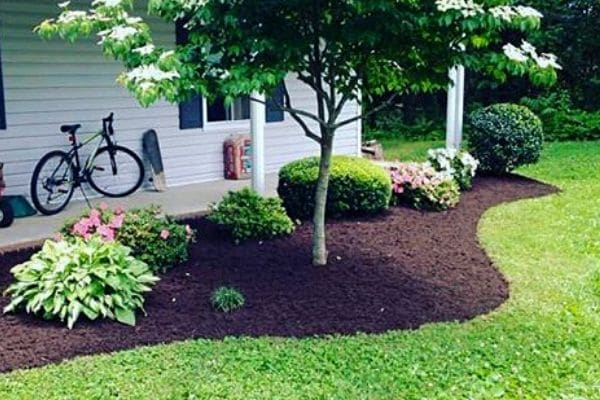 A landscape bed with defined edges, fresh mulch and pruned plants and bushes.