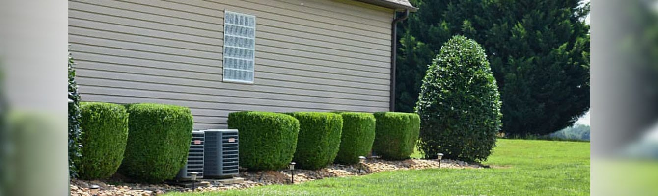 A landscape bed with evenly trimmed hedges.