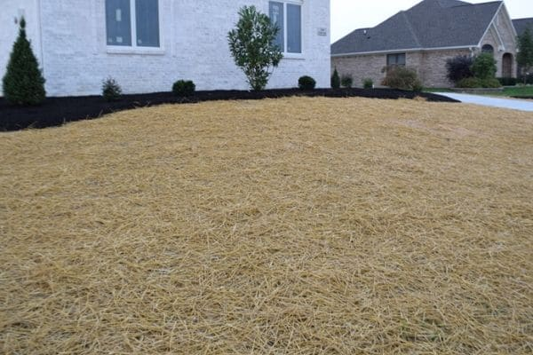 A close up image of a front yard with straw covering the turf after seed placement.